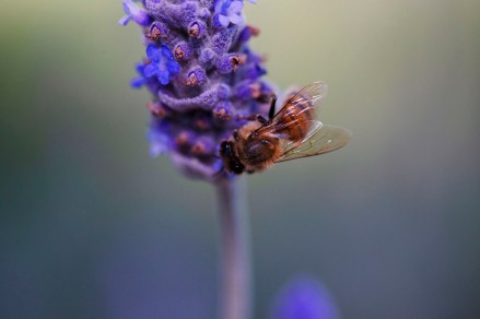 Busybee - Tracey Christina (Commended)