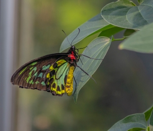 Butterfly - Jessica Valasinavicius (Credit)