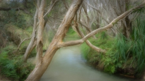 Eli Creek - Ian Logan (Highly Commended)