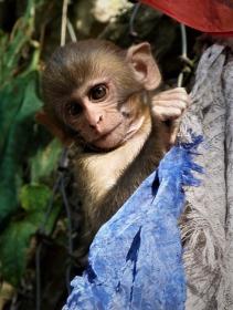 Monkey mischief - Frances Walker (Merit)
