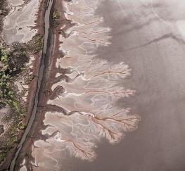 Mudflats - Mary Logar (Credit)