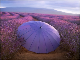 Ineke Struk - Bridestowe Lavender Farm (Highly Commended)