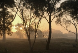 Sharon Oakley - Early Morning Golfer (Commended)