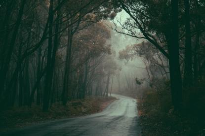 Misty Road - Nishan Wanigasekara