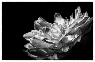 Mike Cook - Water Lily, Blue Lotus Garden, Yarra Junction (Highly Commended)