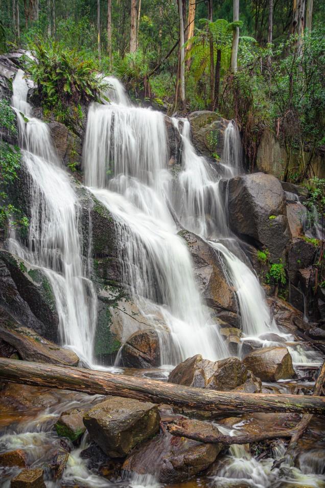 Toorongo, Victoria - Australia 'Toorong Falls Reserve' Photograp